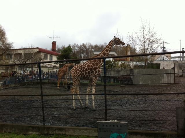 旭山動物園なう
